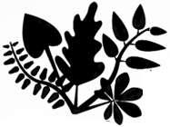 Herbario Anetta Mary Carter (HCIB)