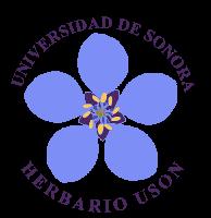 Herbario de la Universidad de Sonora (USON)